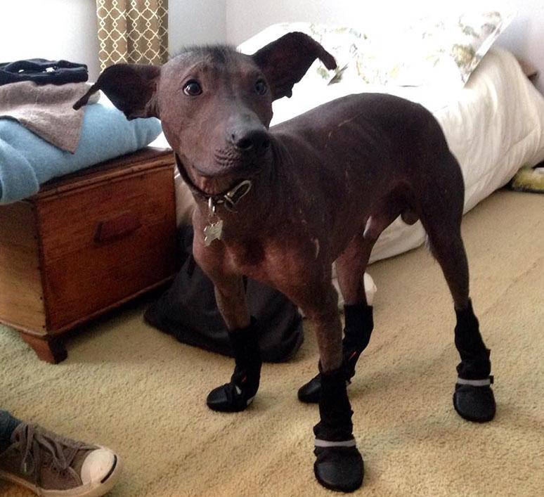 El perro con botas | El Estado Mental